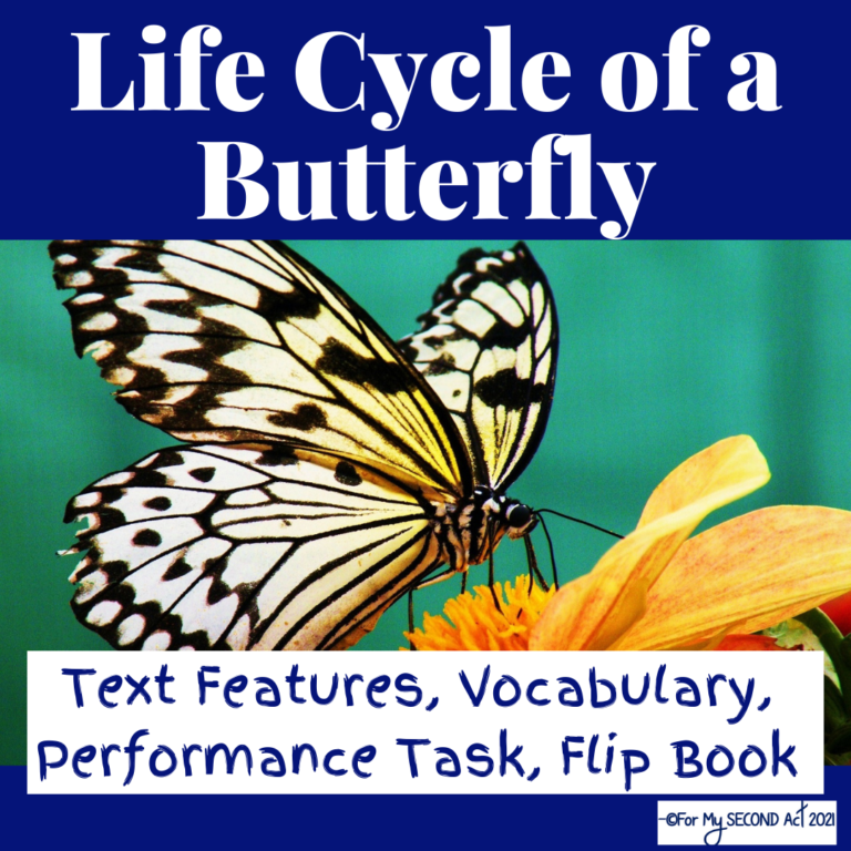 life-cycle-of-a-butterfly-activities