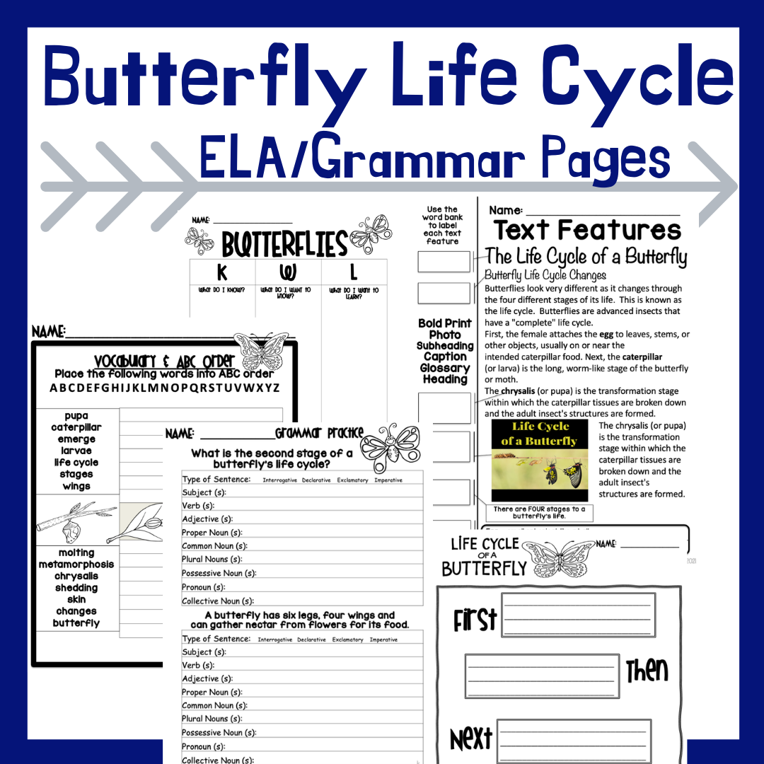 life-cycle-of-a-butterfly-printables