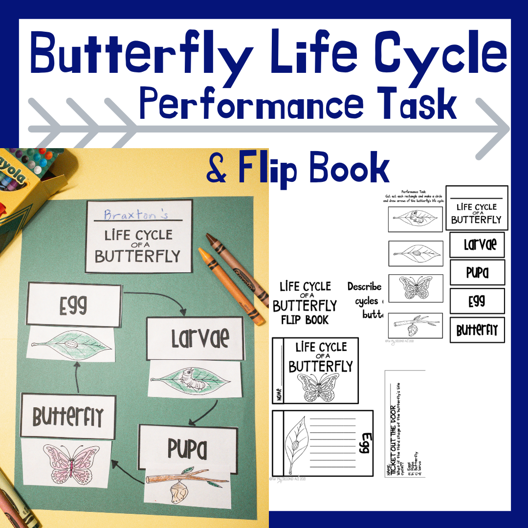 life-cycle-of-a-butterfly-second-grade